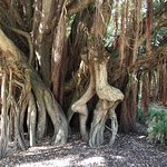 Interesting trees-easy to imagine human or animal figures hidden in the trunks