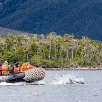 Photo of Patagonia Photosafaris
