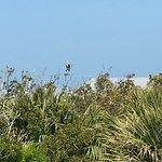 Φωτογραφία: Gasparilla Island State Park