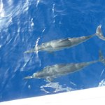 Spinner Dolphins!