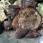 Kawiti Glow Worm Caves
