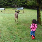 Our daughter feeding the deer.