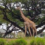 Foto van Honolulu Zoo