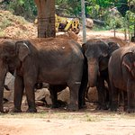 elephants in their enclosure