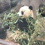 Foto de Beijing Zoo