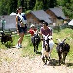 Schafe, Ziegen, Hasen und ein Pony auf der MarktlAlm