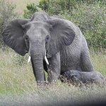 Protective ellie w/baby