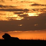 Sunset over lion
