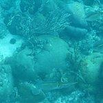 Bilde fra Goby Divers