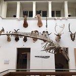 Naturalis Biodiversity Center Photo
