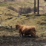 Photo de Highland Explorer Tours