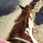Lady, a nice horse..