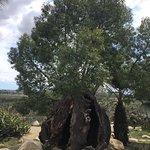 Foto Taman Hiburan Balboa