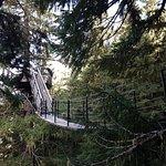 Canopy walk between zips (308657917)