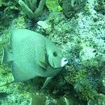Photo of Deep Life Divers