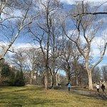 Foto di Central Park