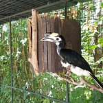 Photo of Phuket Bird Park