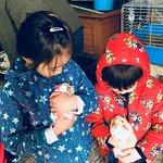 Cuddling the guinea pigs