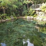Photo de Rainbow Springs Nature Park