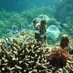 صورة فوتوغرافية لـ Rising Sun Dive Center