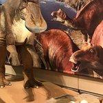 ภาพถ่ายของ Osaka Museum of Natural History