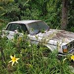 Foto de Tan's Camellia Garden