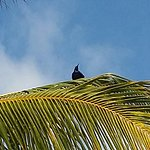 Foto de Catalonia Royal Tulum Beach & Spa Resort