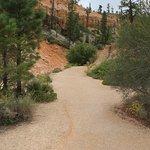 Φωτογραφία: Mossy Cave Trail