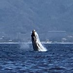 Foto di Ocean Friendly Whale Watching Tours
