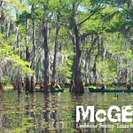 A couple hours is all you need to take a 3.5 mile paddle through the beautiful cypress trees.