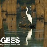 Birds abound! Including great egrets and herons.