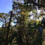 Foto de Reserva Bosque Nuboso Santa Elena