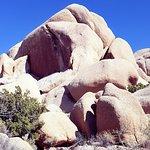 Photo of Joshua Tree Ranch