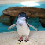 Photo de Kangaroo Island Wildlife Park