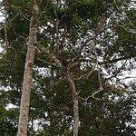 Photo of Kinabatangan Jungle Camp
