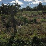 Antigua Vegetation
