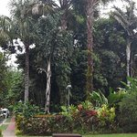 Another view of Cairns Botanical Gardens