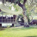 The Elephant Cafe