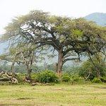 Photo of Ngorongoro Crater