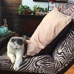 Resident cat!