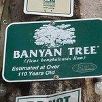 Banyan Tree Sign