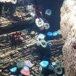 Photo of Lisbon Oceanarium