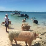 Swimming with the Pigs in Great Exuma