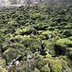 Rocks on trail