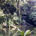 Foto de Jardín Botánico de Bogotá Jose Celestino Mutis