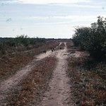 Фотография False Cape State Park