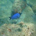 Peixes na Ilha do Arvoredo