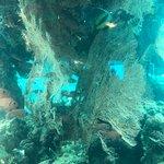 Photo of Underwater Observatory Marine Park