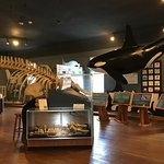 In The Whale Museum