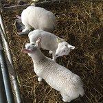 Foto de Glebe Farm Astbury